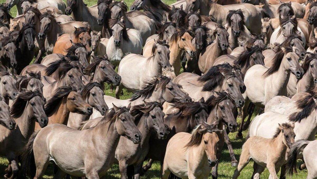 Horse Invasion