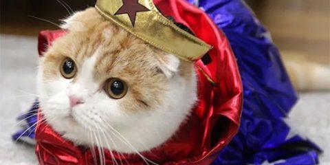 Косплей для кошки