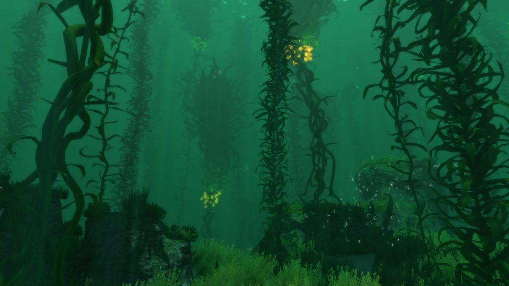 Отмели и лес водорослей