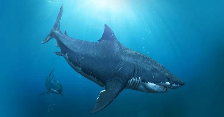 Доисторическая акула была названа в честь компьютерной игры