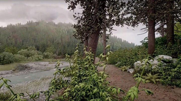 Фотореалистичный лес демонстрирует всю мощь PS4