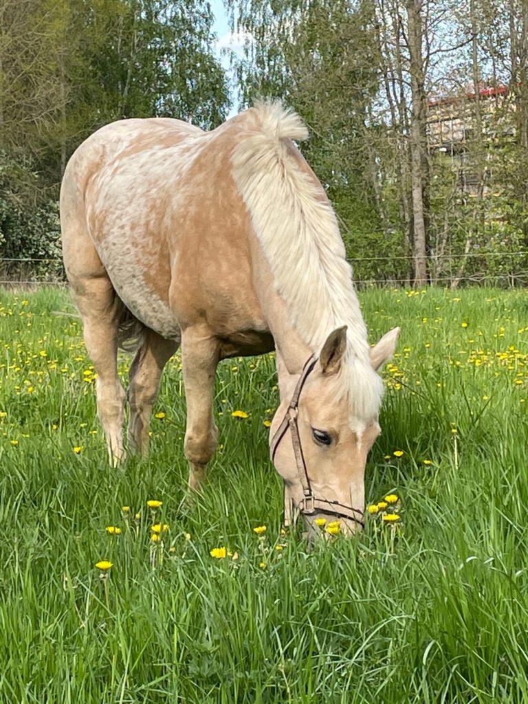 Разработчики Valheim купили настоящую лошадь